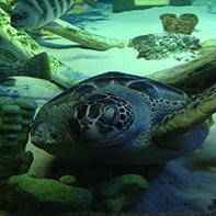 Upcoming Travel: SEA LIFE Kansas City Aquarium
